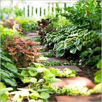 10 съвета за сенчестата градинка